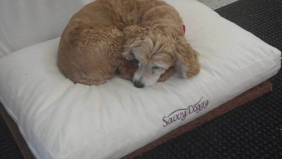 The Good And Bad Of Letting Your Dog Sleep In Your Bed With You