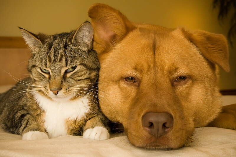 Dealing With Pet Hair On Your Mattress & Furniture