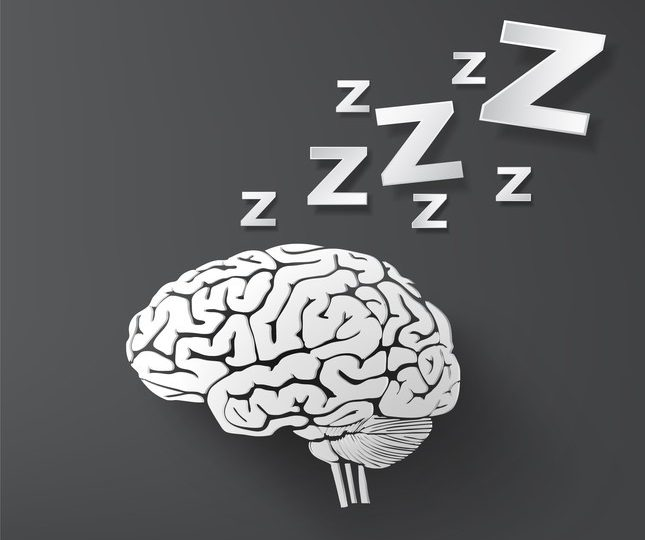 Sleep Myth Debunked: Does Your Brain Shut Down When You Sleep?